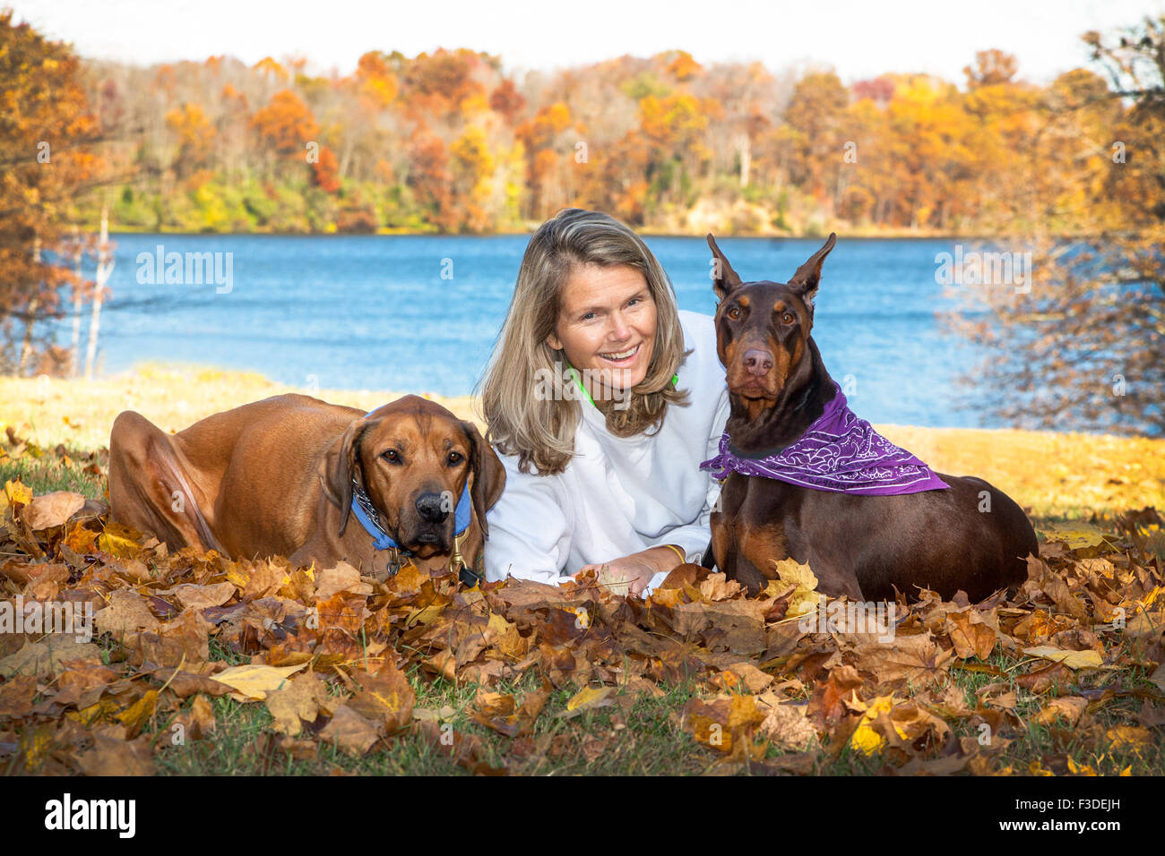 mature attractive middle aged woman with long hair, laying in fall leaves with her 2 large pet companion dogs in - Stock Image