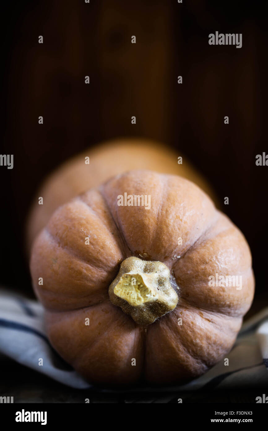 A butternut squash. - Stock Image