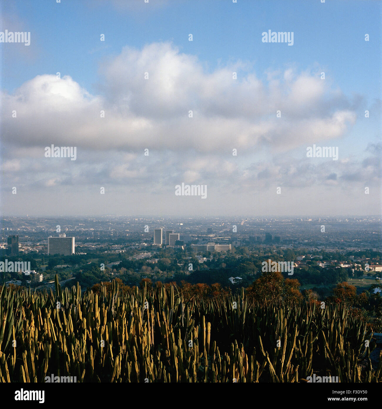 Cactus covered mountaintop overlooking city - Stock Image