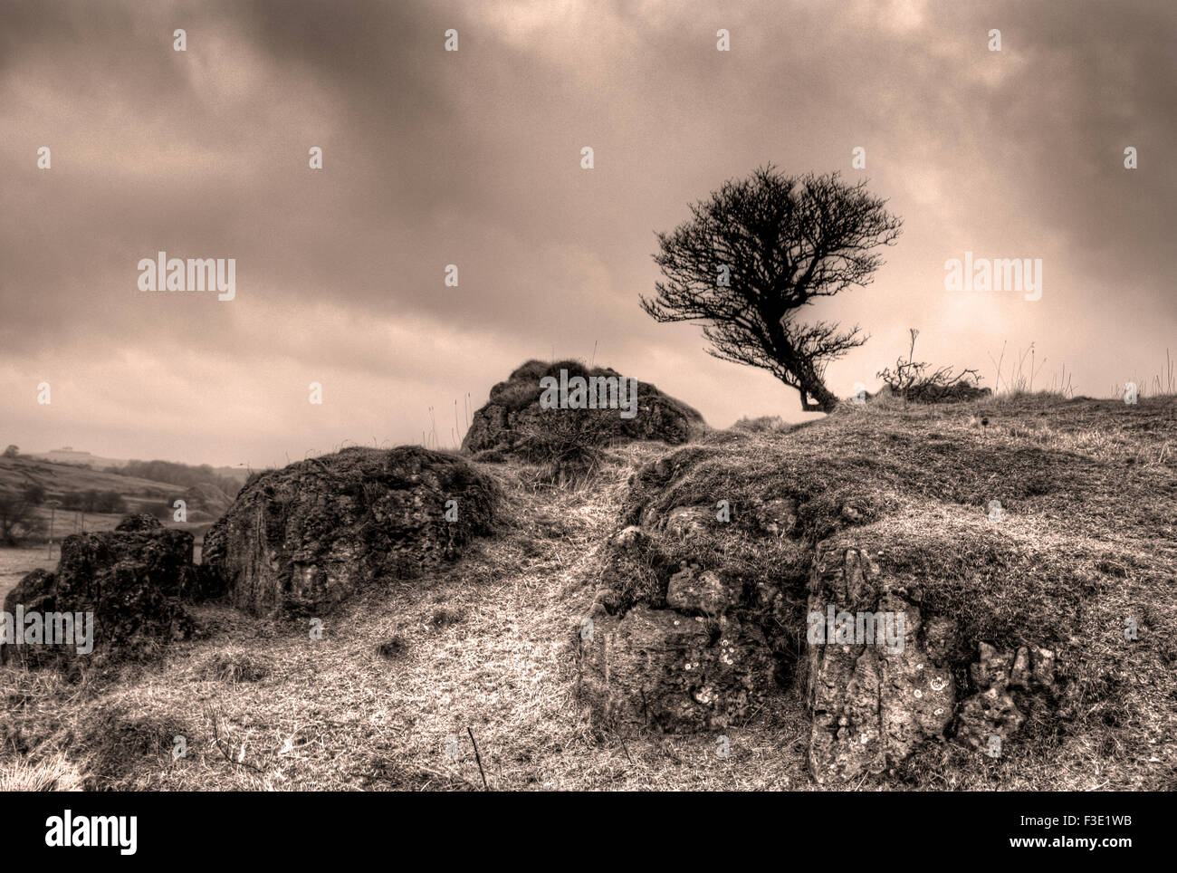 A lone tree stands against the elements at Harboro Rocks- A Sepia Toned Study - Stock Image