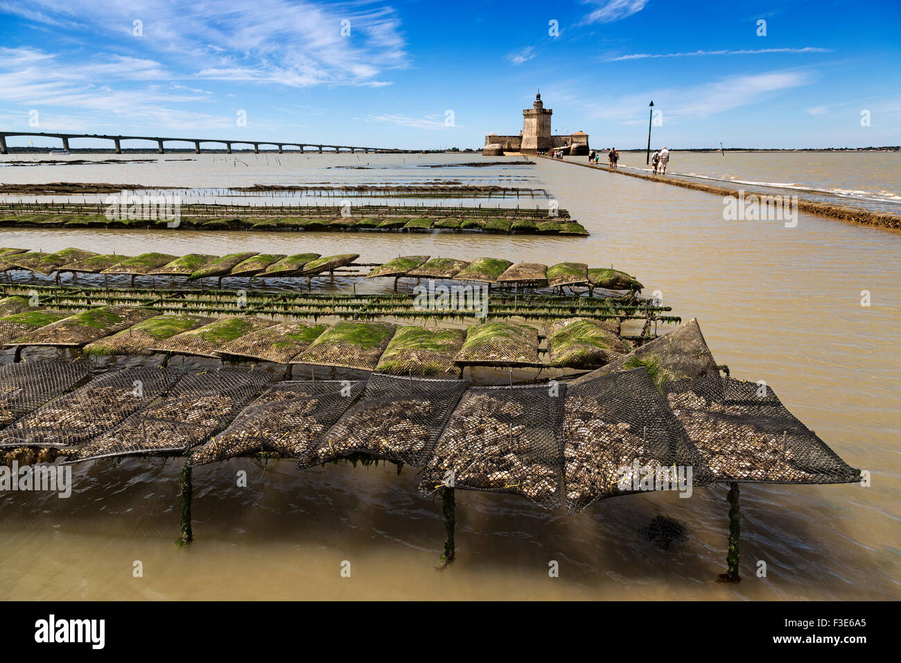 Oyster farming Fort Louvois island d'Oléron Pointe du Chapus Charente Maritime France Europe Stock Photo