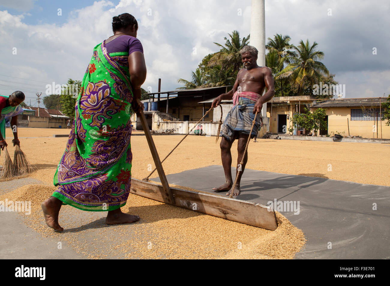 Workers spreading rice out to dry in Kanchipuram - Stock Image