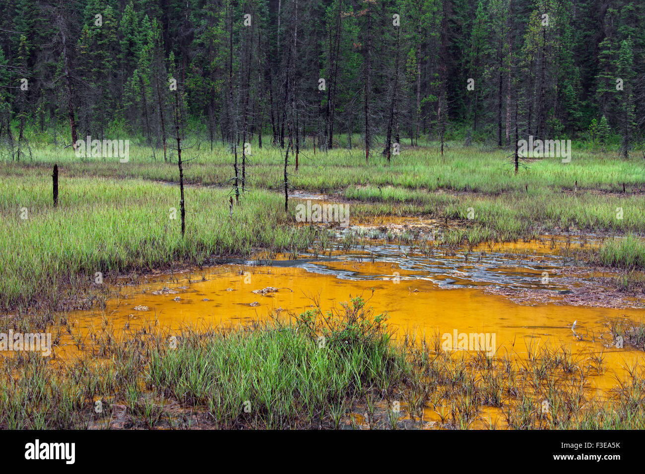 Paint Pots, iron-rich cold mineral springs in the Kootenay National Park, British Columbia, Canada - Stock Image