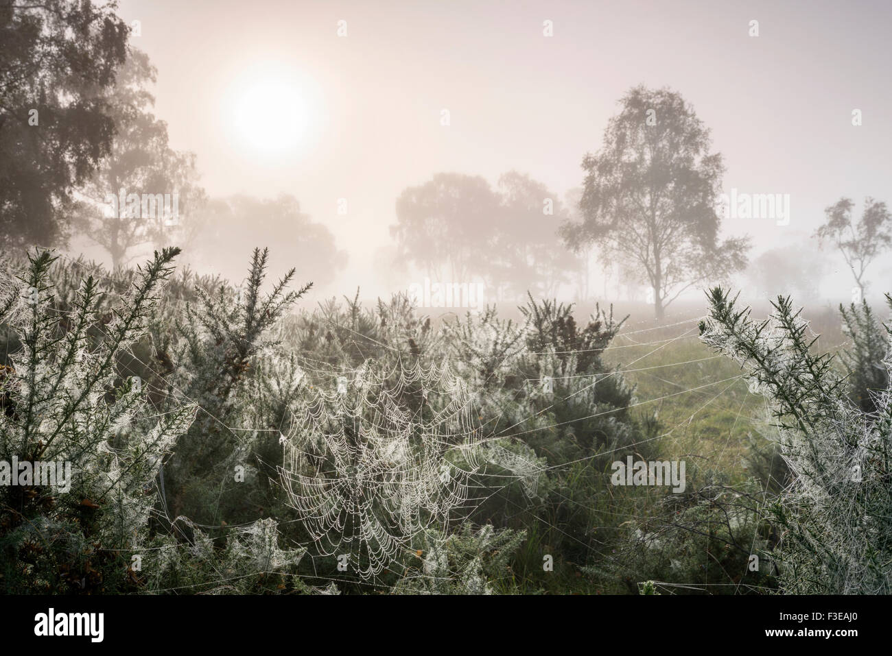 Cobweds and early morning dew, Strensall Common, September 2015 - Stock Image
