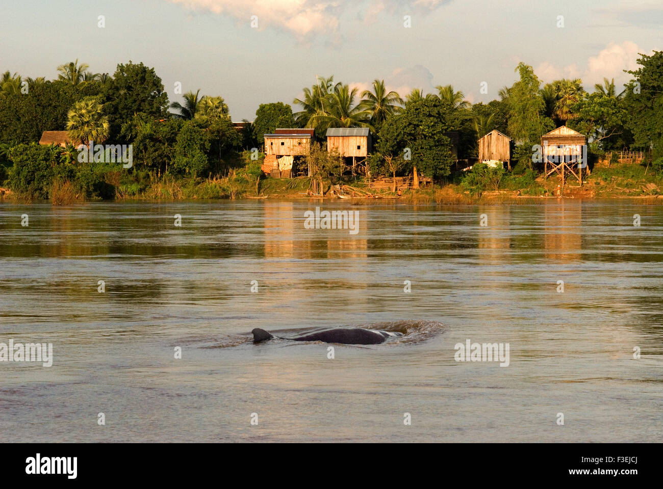 Mekong River near Kampi. Looking for some fresh water dolphins Irrawaddy . Kratie. Irrawaddy Dolphin Watching, The - Stock Image