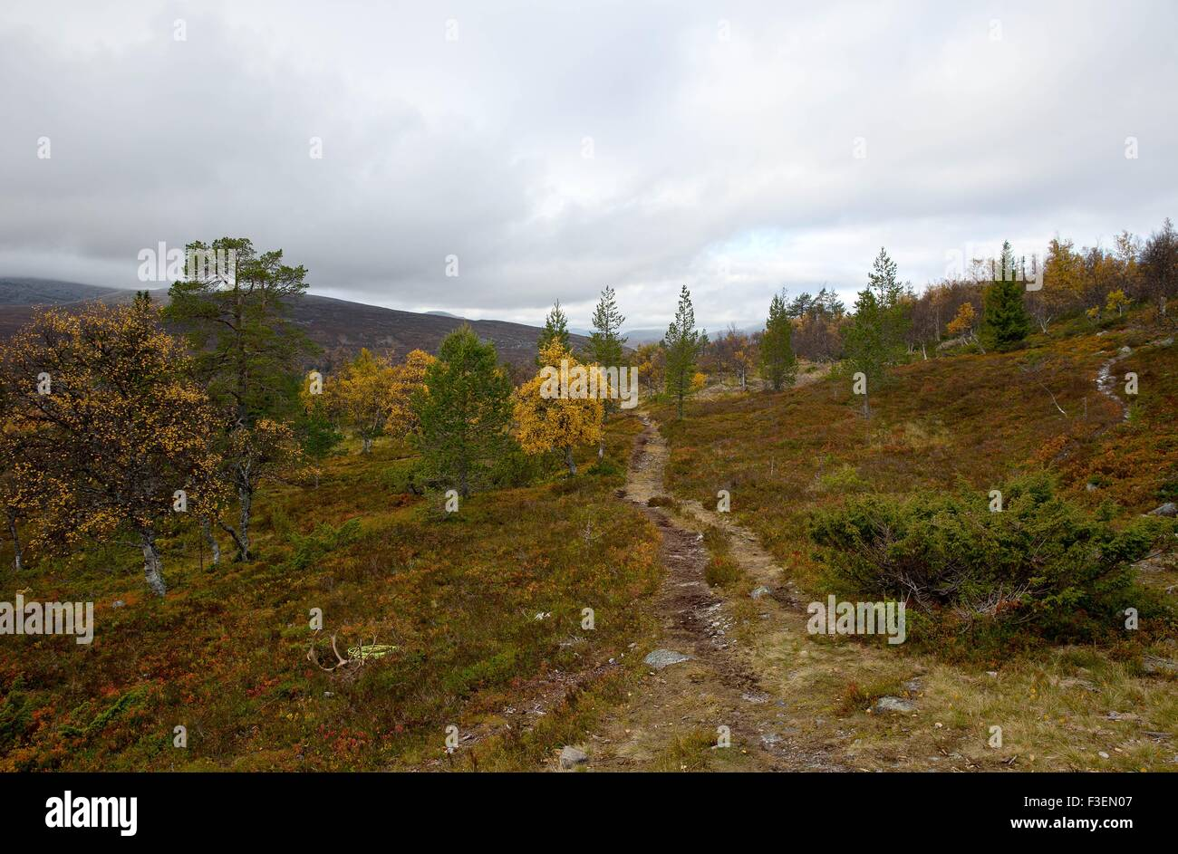 Dalarna, Sweden. 6th October, 2015. Idre Sami village Visit to Idre Sami village Last day of the 2 days visit of - Stock Image