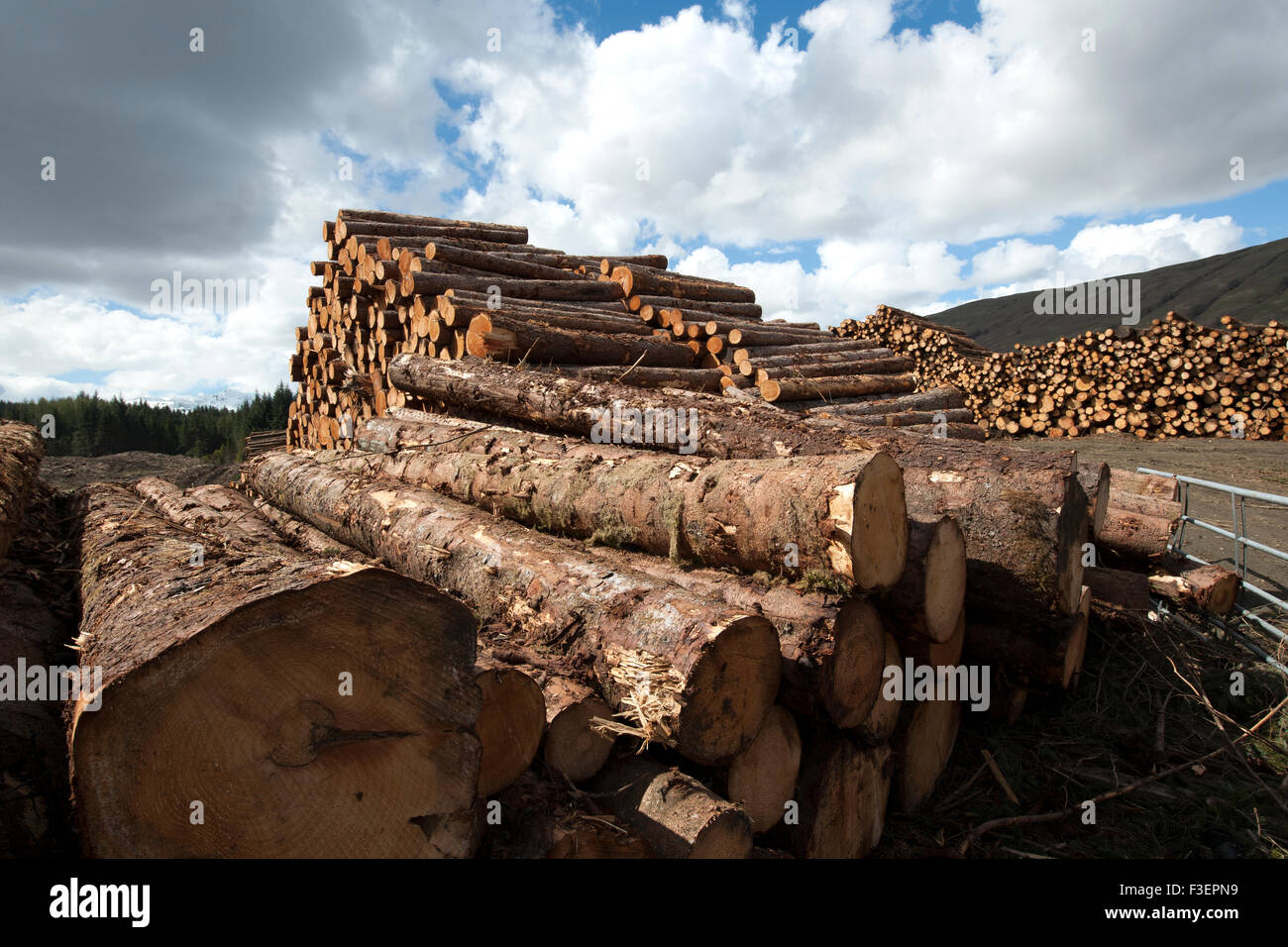 Logging at Breadalbane, Scotland, UK. - Stock Image