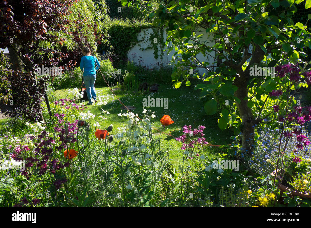 Elderly woman mowing lawn with electric mower, Wales, UK - Stock Image
