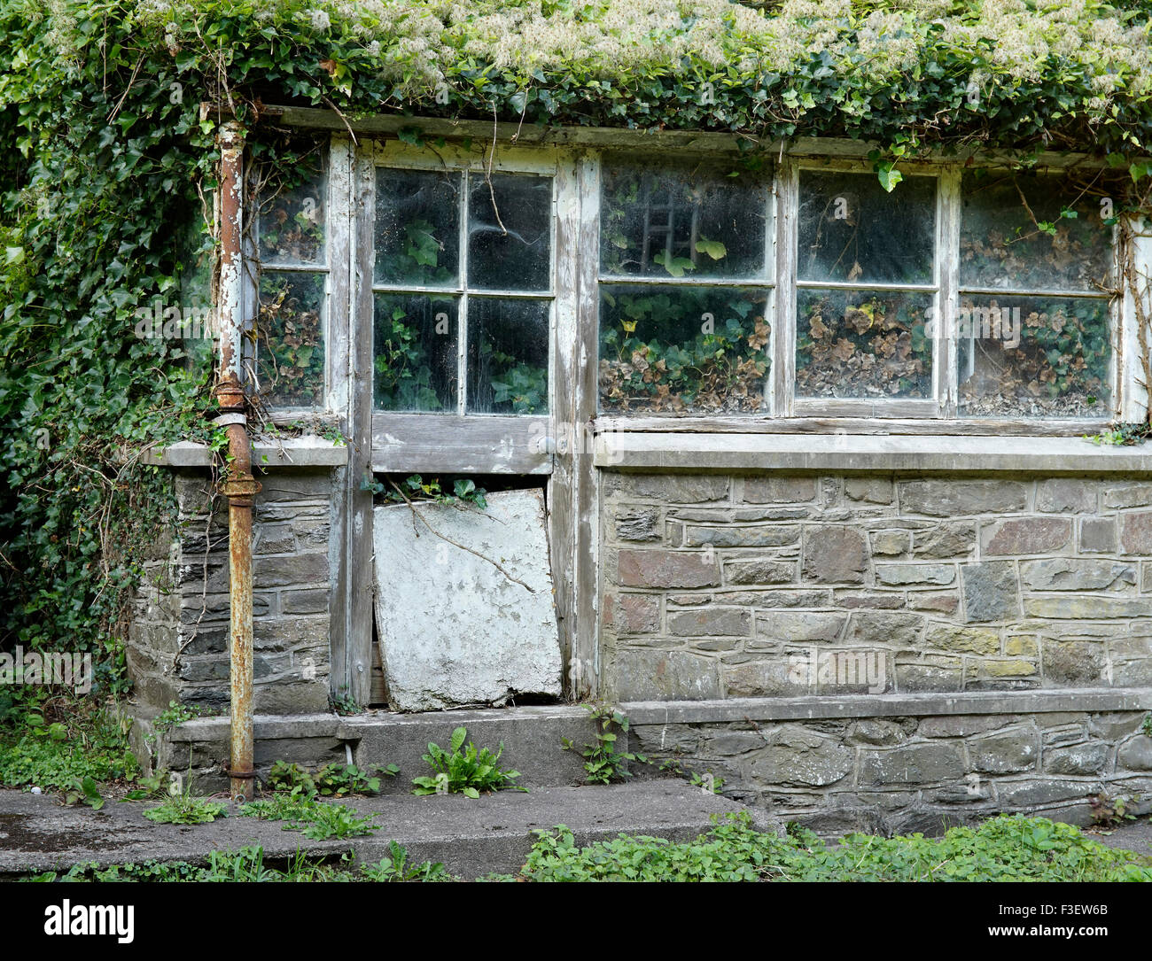 An old greenhouse garden room overrun with Russian Vine, Lynmouth, North Devon, England, UK. - Stock Image