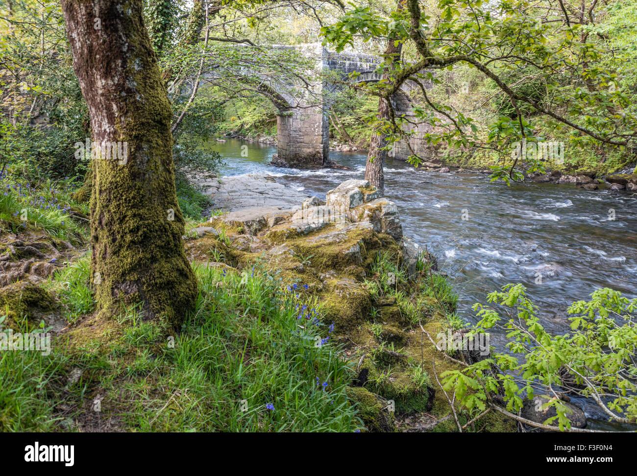 Riverside oak forest at Dartmoor National Park, Devon, England, UK | Landschaft im Dartmoor National Park, Devon, - Stock Image