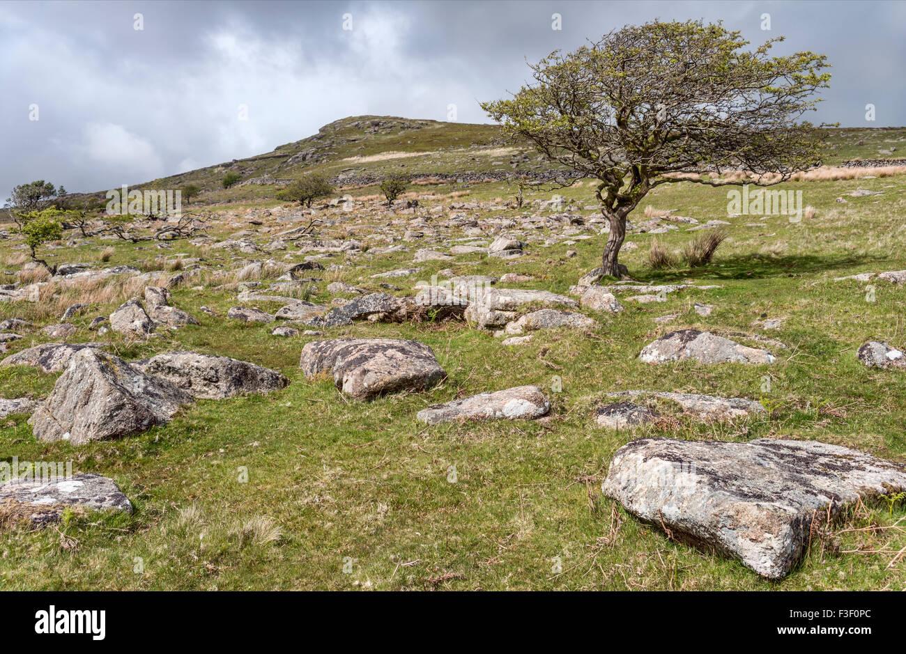Landscape at the Dartmoor National Park, Devon, England, UK | Landschaft im Dartmoor National Park, Devon, England, - Stock Image