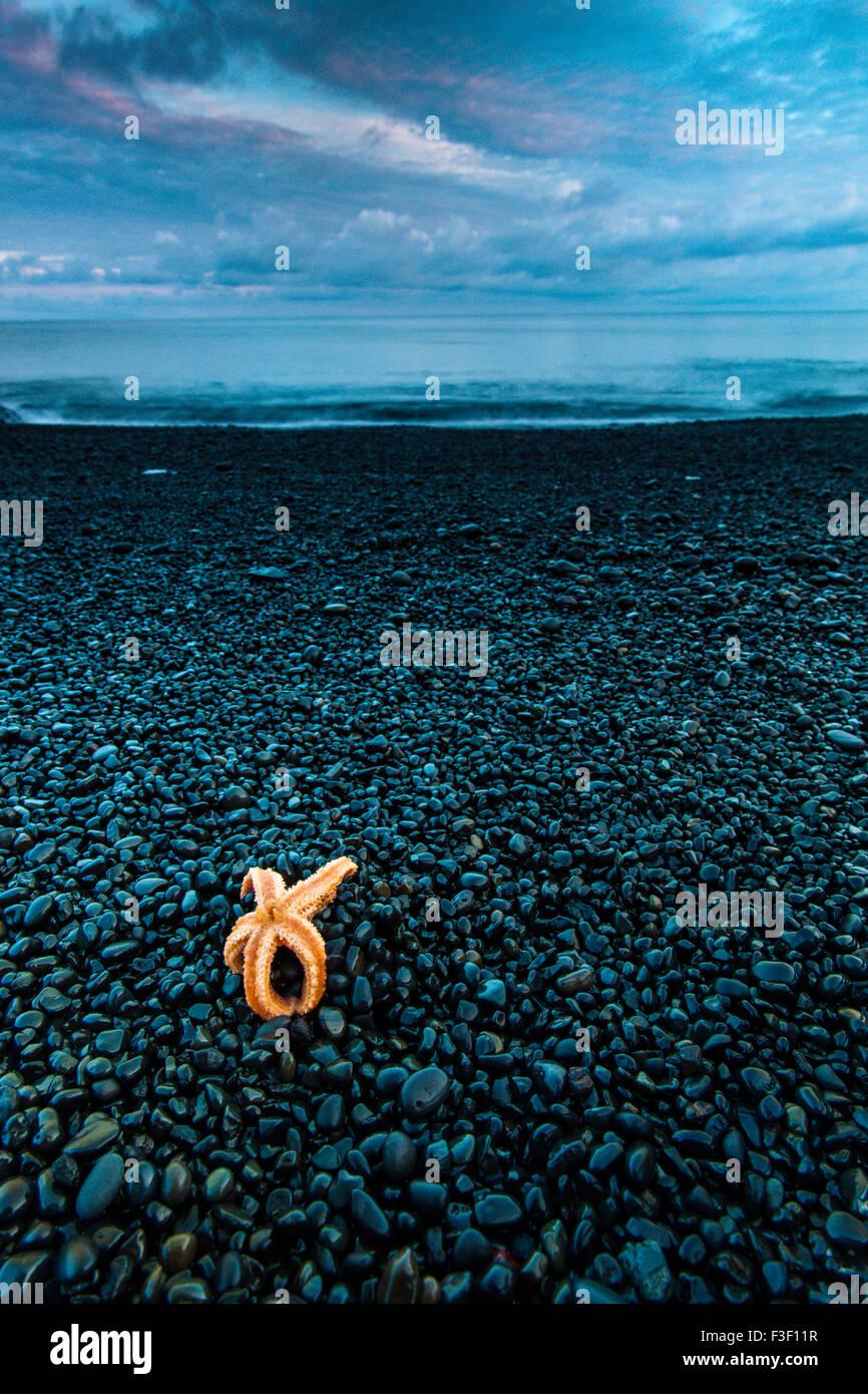 Geografie, Djupalonssandur, Seestern, Strand,  Snaefellsjökull Nationalpark, Island Stock Photo