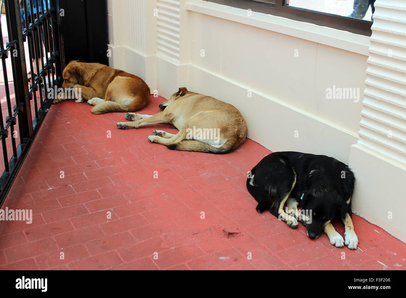 Sleeping Stray Dogs outside in Istanbul - Stock Image