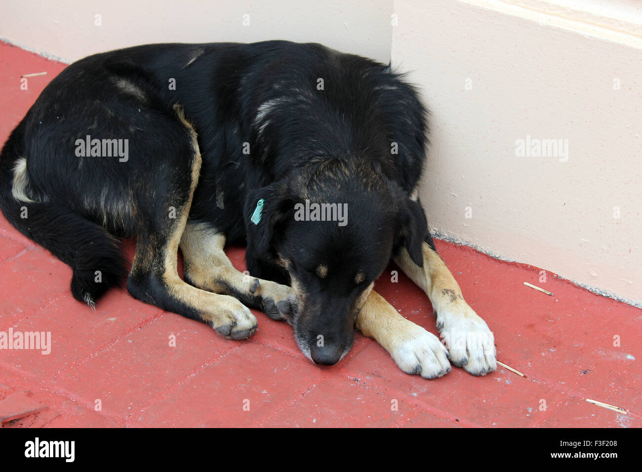 Black hair stray dog Sleeping outside in Istanbul - Stock Image