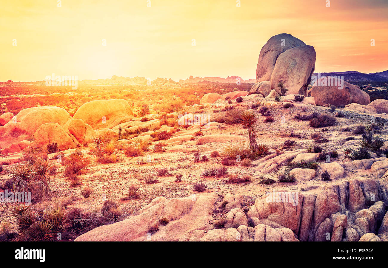 Sunset over desert in Joshua Tree National Park, California, USA. Stock Photo