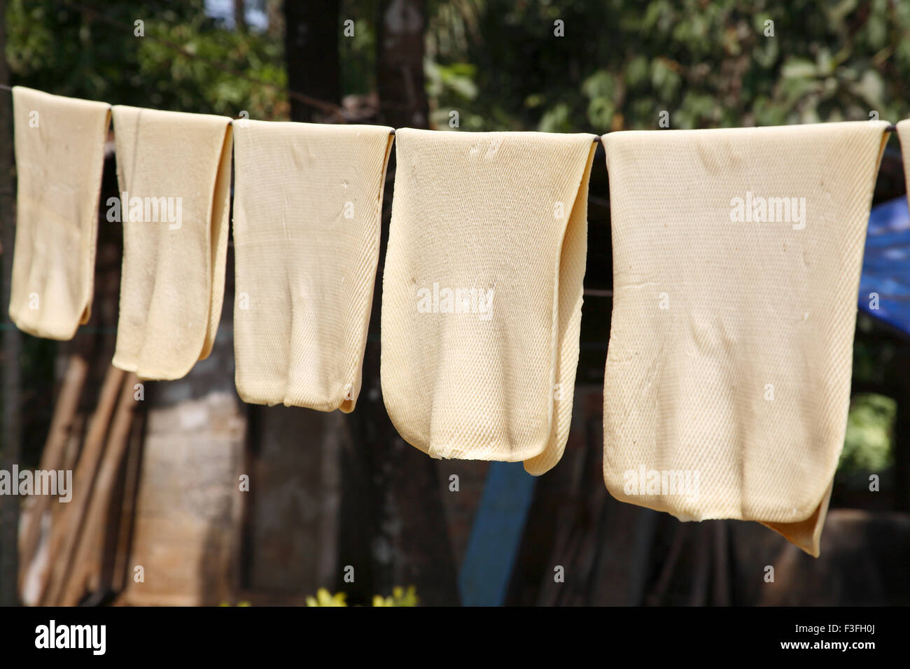 Rubber Raw Rubber Sheets Kept For Drying Kerala India