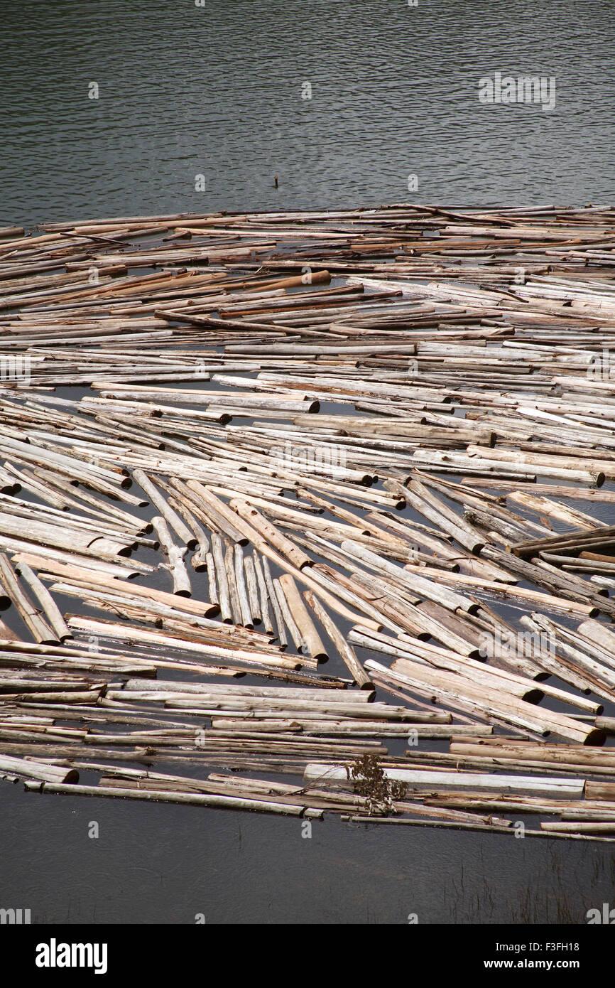 Wood logs floating on water kept for seasoning near echo point at lake Munnar; Kerala ; IndiaStock Photo