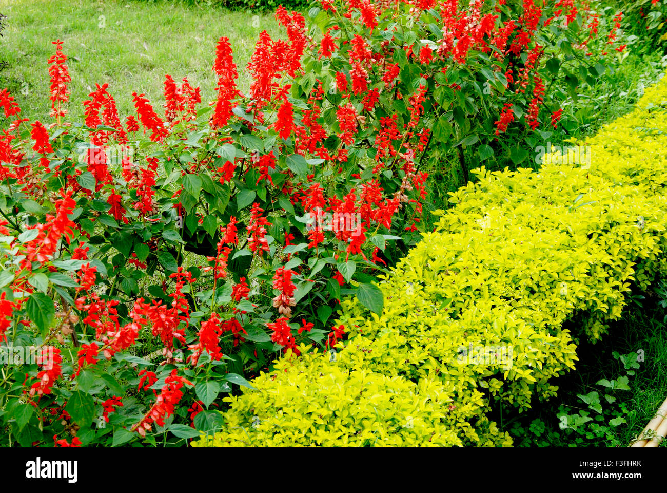 Beautiful flowers of india stock photos beautiful flowers of india beautiful flowers in garden india stock image izmirmasajfo