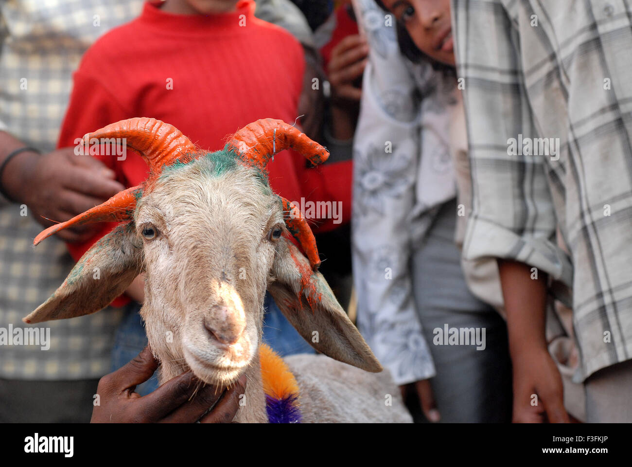 A four horned sacrificial goat put up for sale for Bakri Idd at Deonar slaughter house in Govandi Mumbai - Stock Image