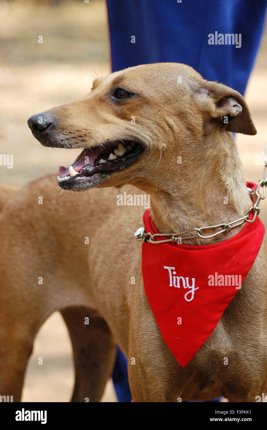 Welfare of Stray dogs ; a Bombay based NGO takes care of stray dogs in the city at Mahalaxmi Mumbai - Stock Image