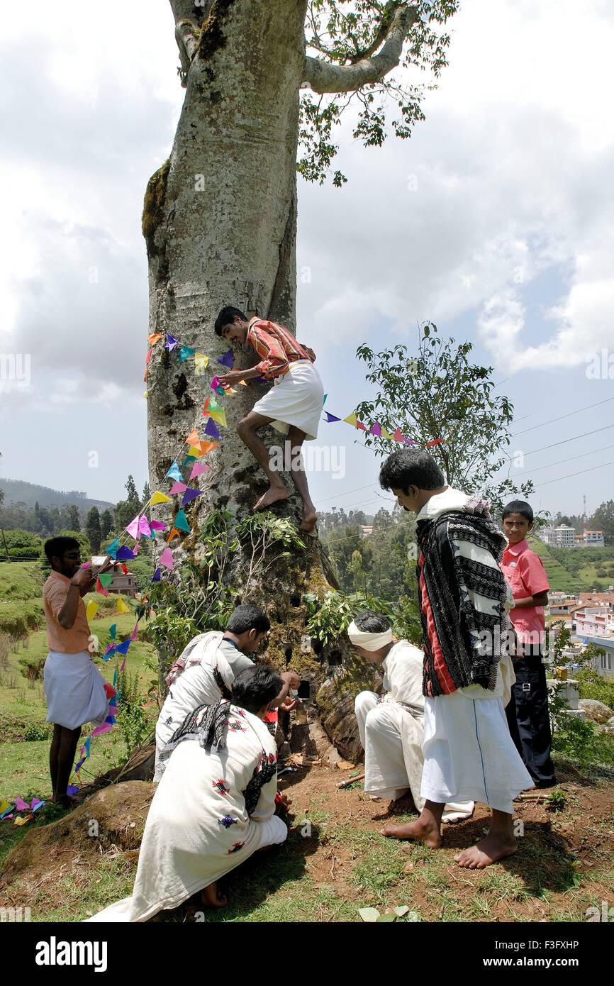 Chiselling the tree trunk prior to celebration of Toda marriage ; Nilgiris ; Tamil Nadu ; India - Stock Image