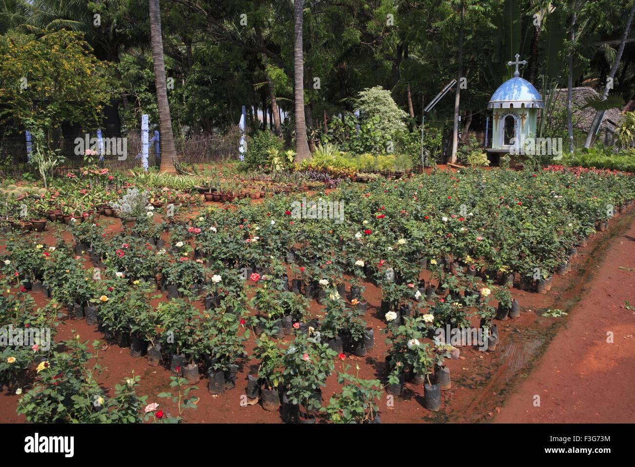 plant nursery ; kodaikanal ; tamil nadu ; india stock photo
