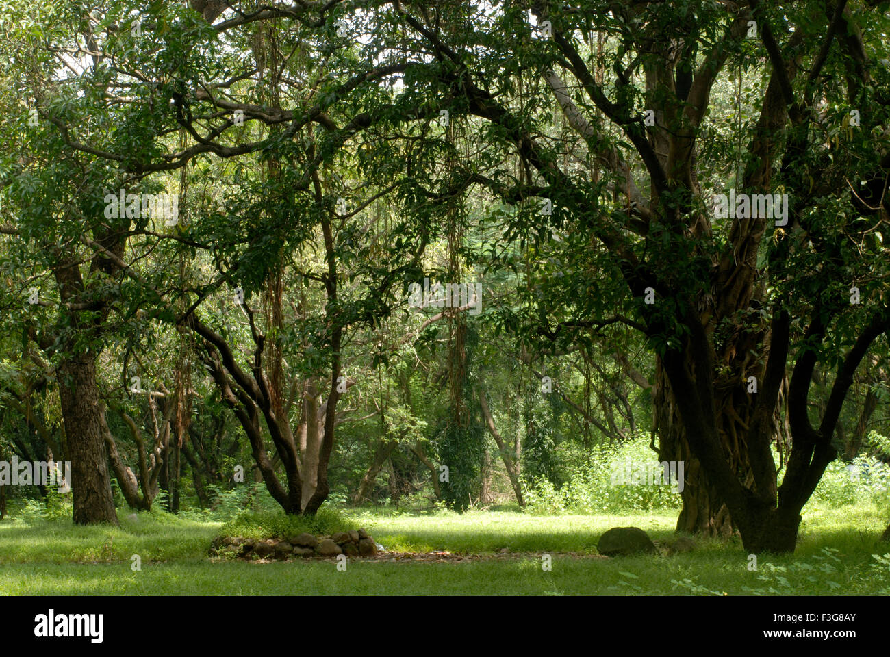 lush green grass at Sanjay Gandhi
