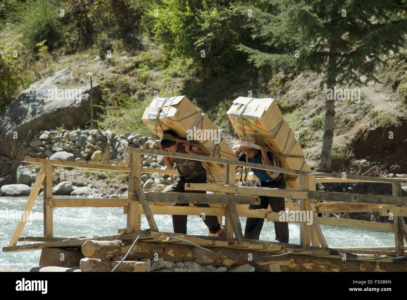 Two Coolies carrying apples for loading in truck for exports at Sangla Valley ; Himachal Pradesh ; India - Stock Image