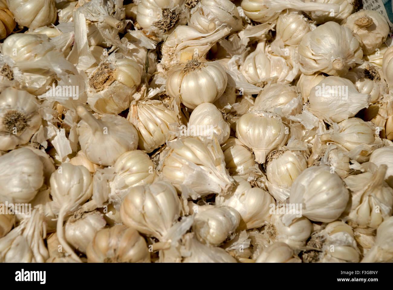 Spices ; garlic vegetable at Kalpa ; Himachal Pradesh ; India - Stock Image