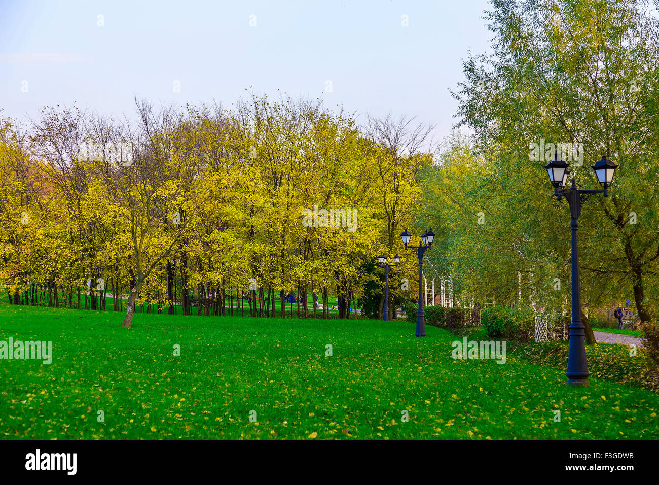 A Green Lawn with Colorful Trees Around the Perimeter of the Lawn on ...
