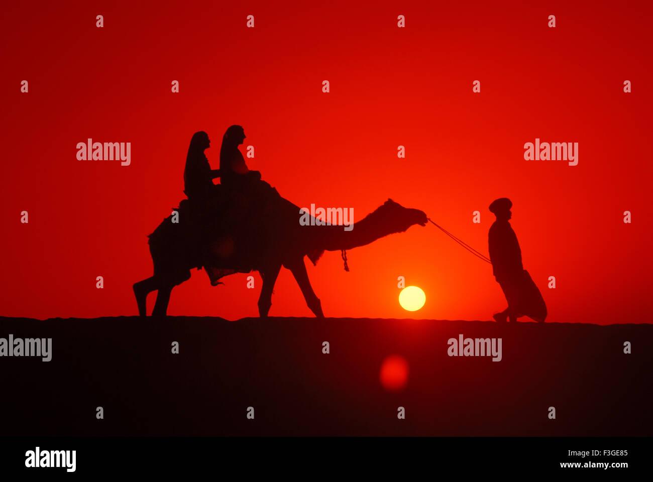 Man with camel walking in evening glory ; Jaisalmer; Rajasthan; India - Stock Image