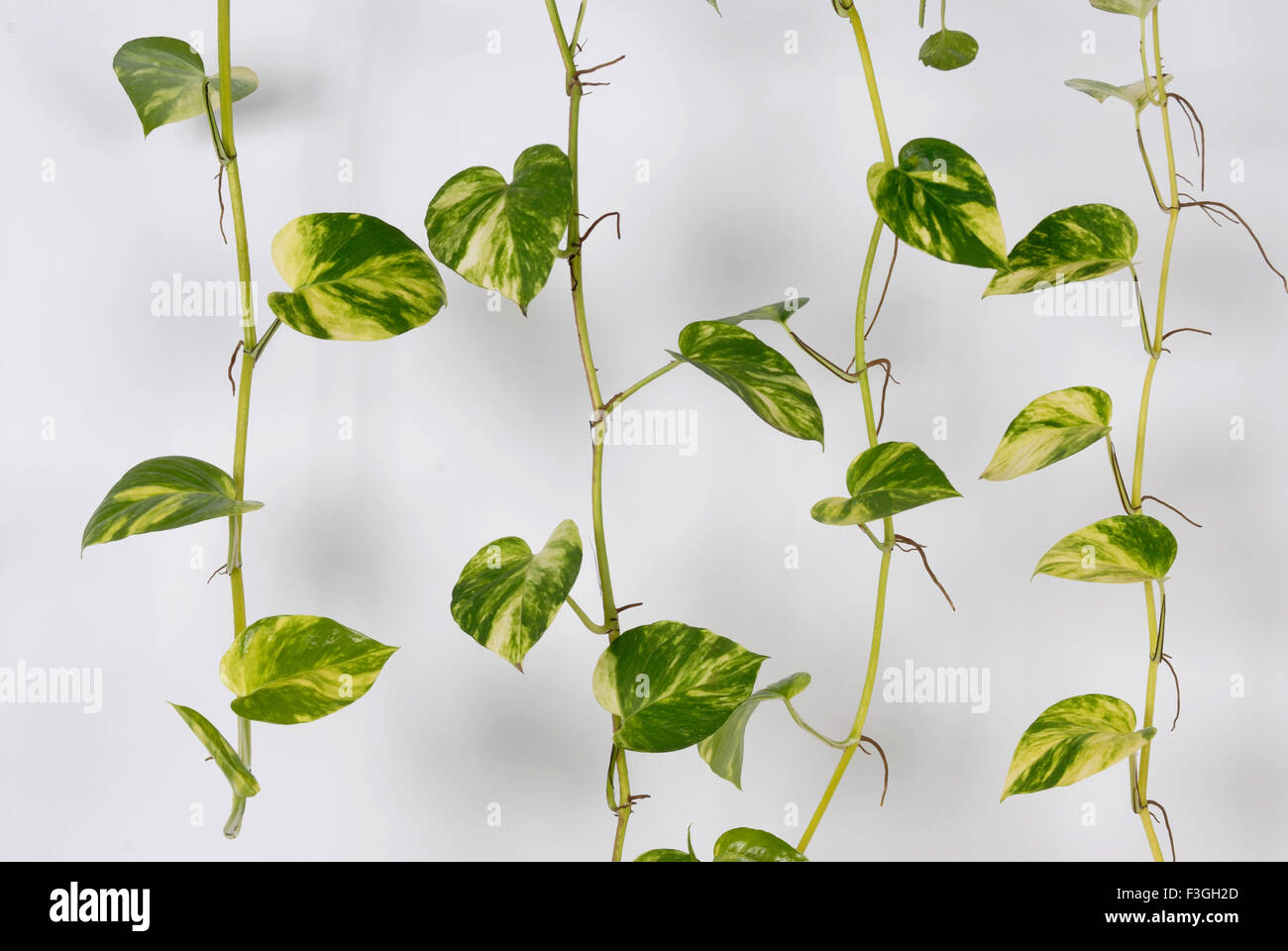 Many plant symbolize growth of wealth - Stock Image