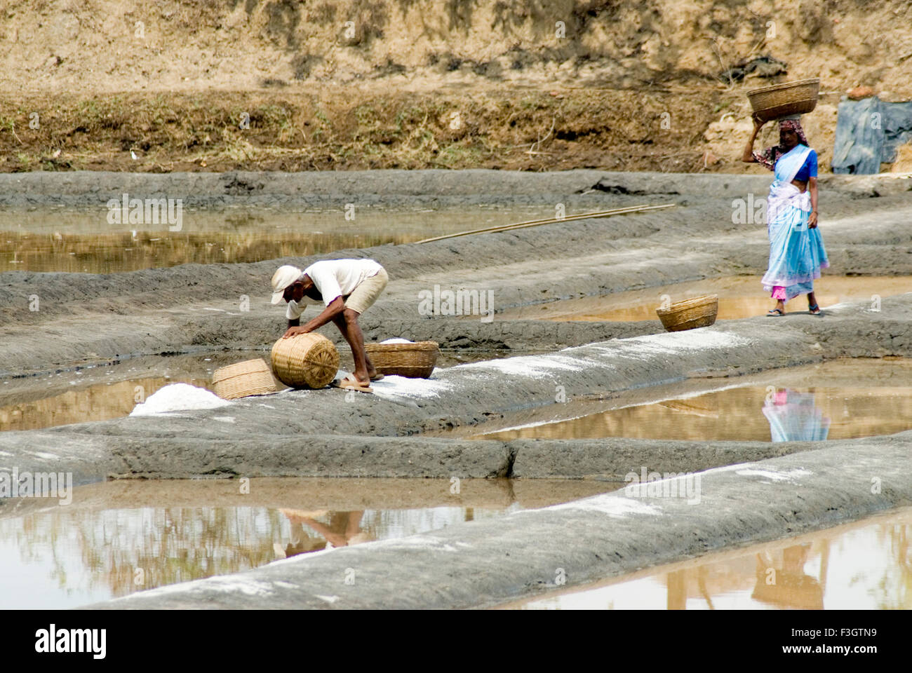 Workers at salt meadow or saltpans at village Shiroda ; district Sindhudurga ; Maharashtra ; India Stock Photo