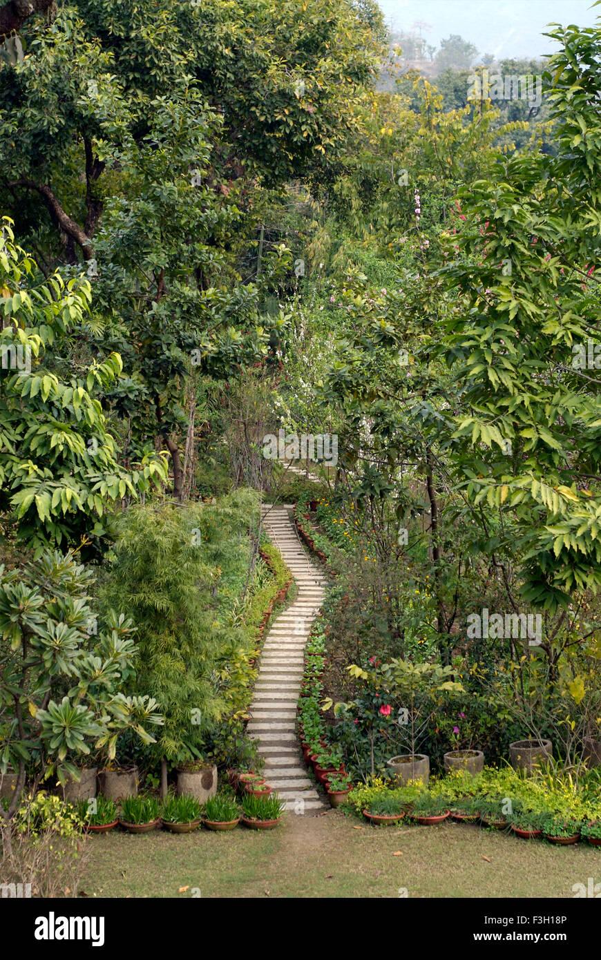 A path made up of tiles in a garden ; Dehradun ; Uttaranchal ; India - Stock Image