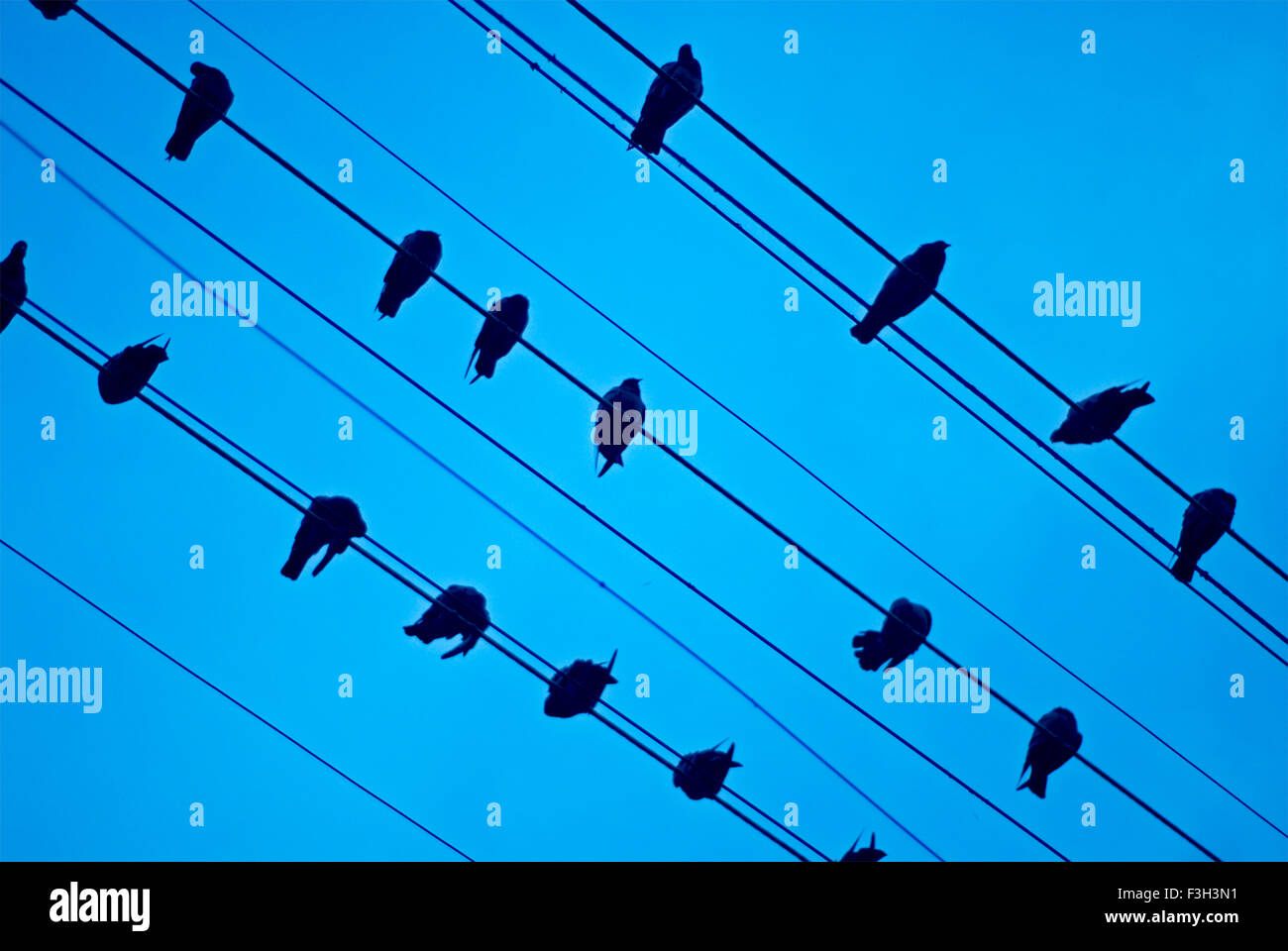 Birds sitting on electric wires tied to a street light at Rajkot ; Gujarat ; India - Stock Image