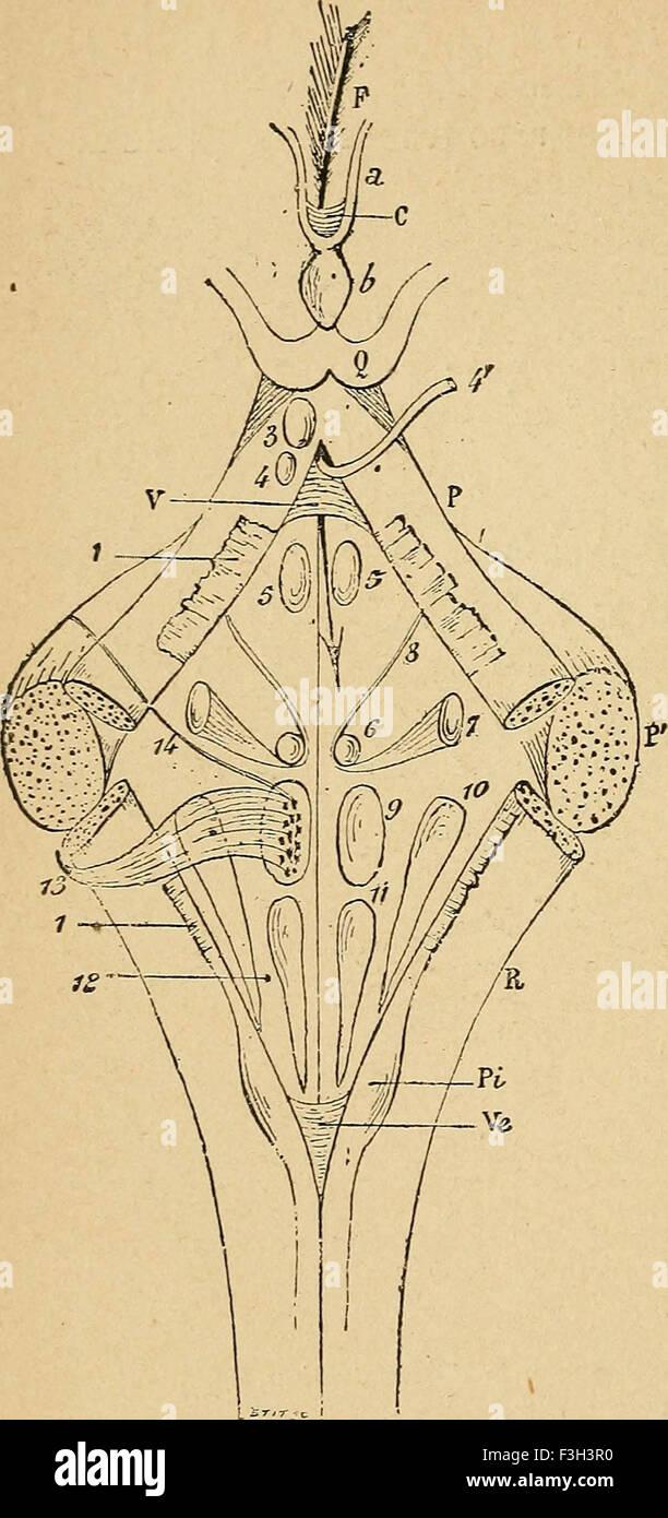 Fantastisch Anatomie Und Physiologie Des Nierensystems Ppt Fotos ...