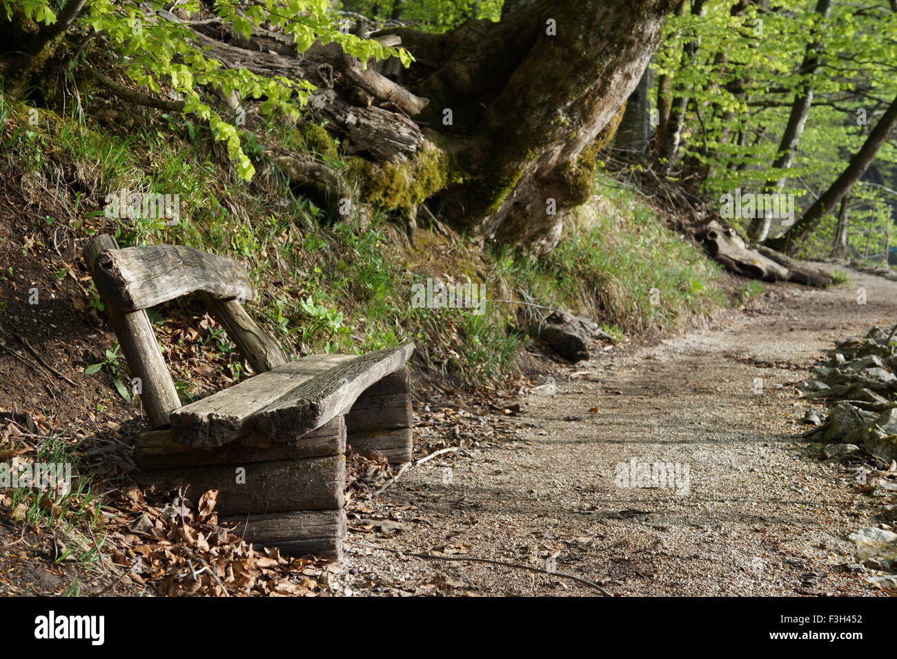 Old Wood Bench In Forest