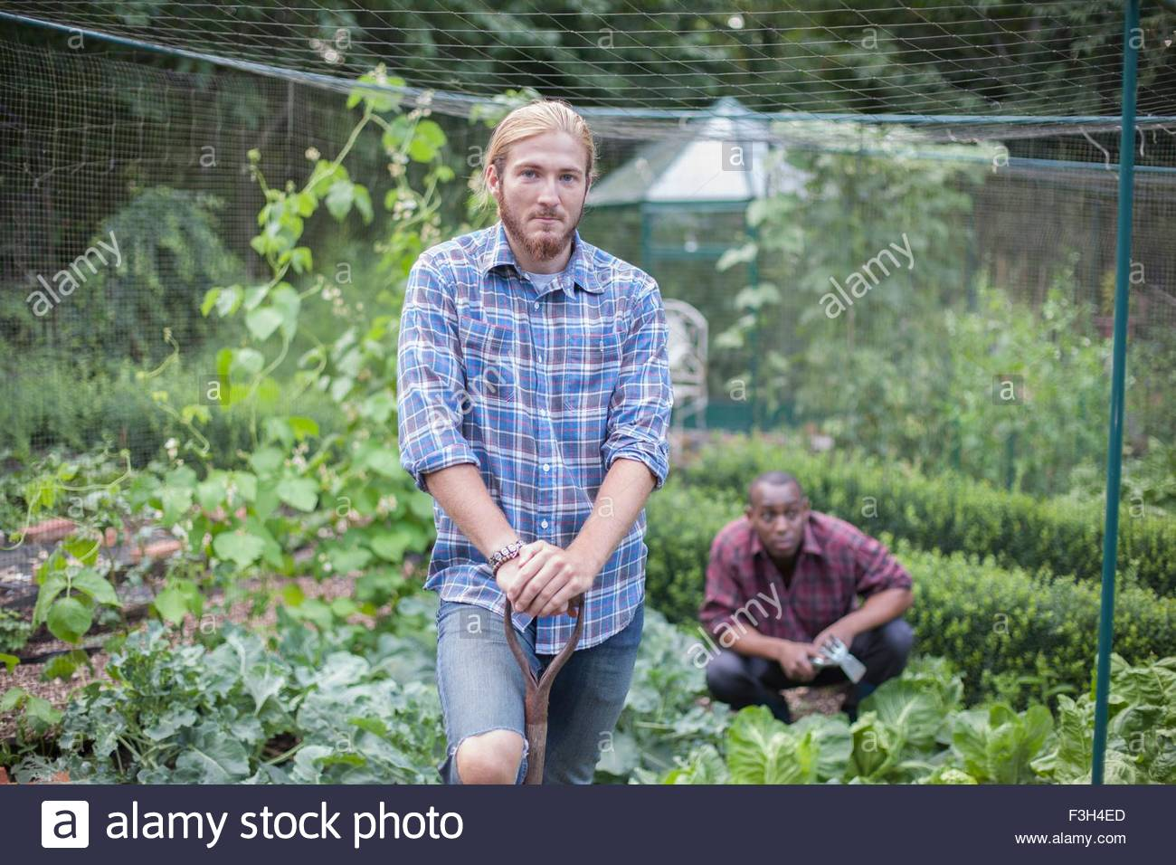 Friends working on allotment - Stock Image