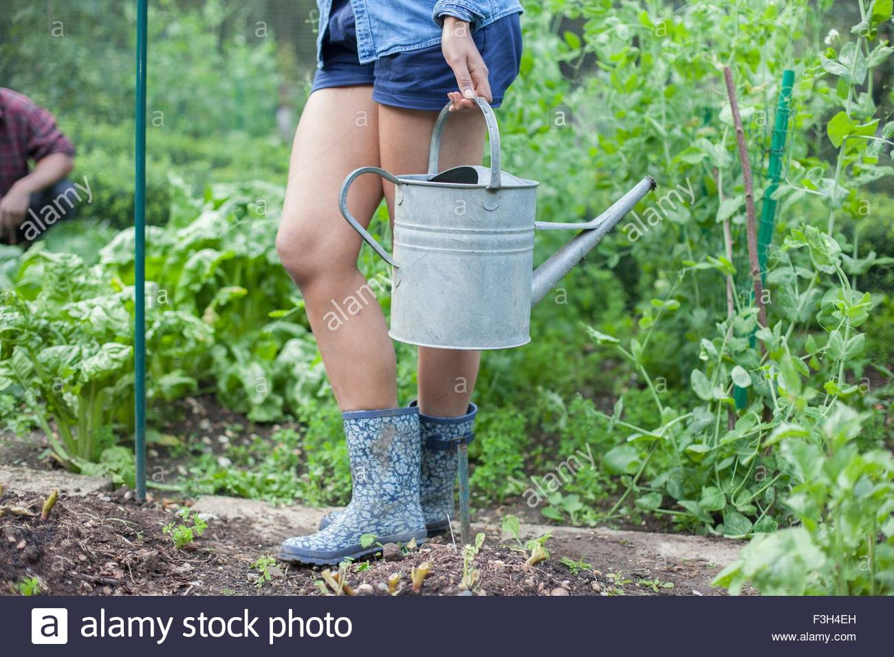 Woman working on allotment - Stock Image