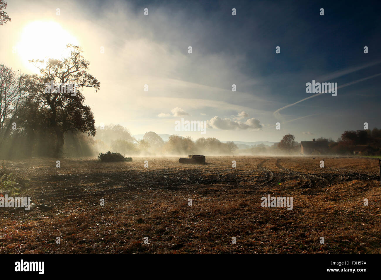 November morning near Child Okeford, Dorset with the rising sun shining through trees and some mist over the fields. - Stock Image