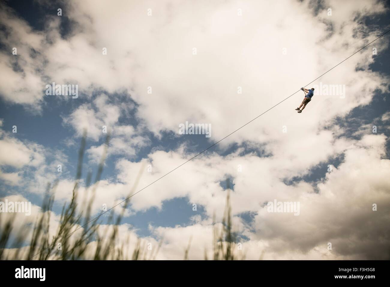 Mature man on zip wire over field - Stock Image