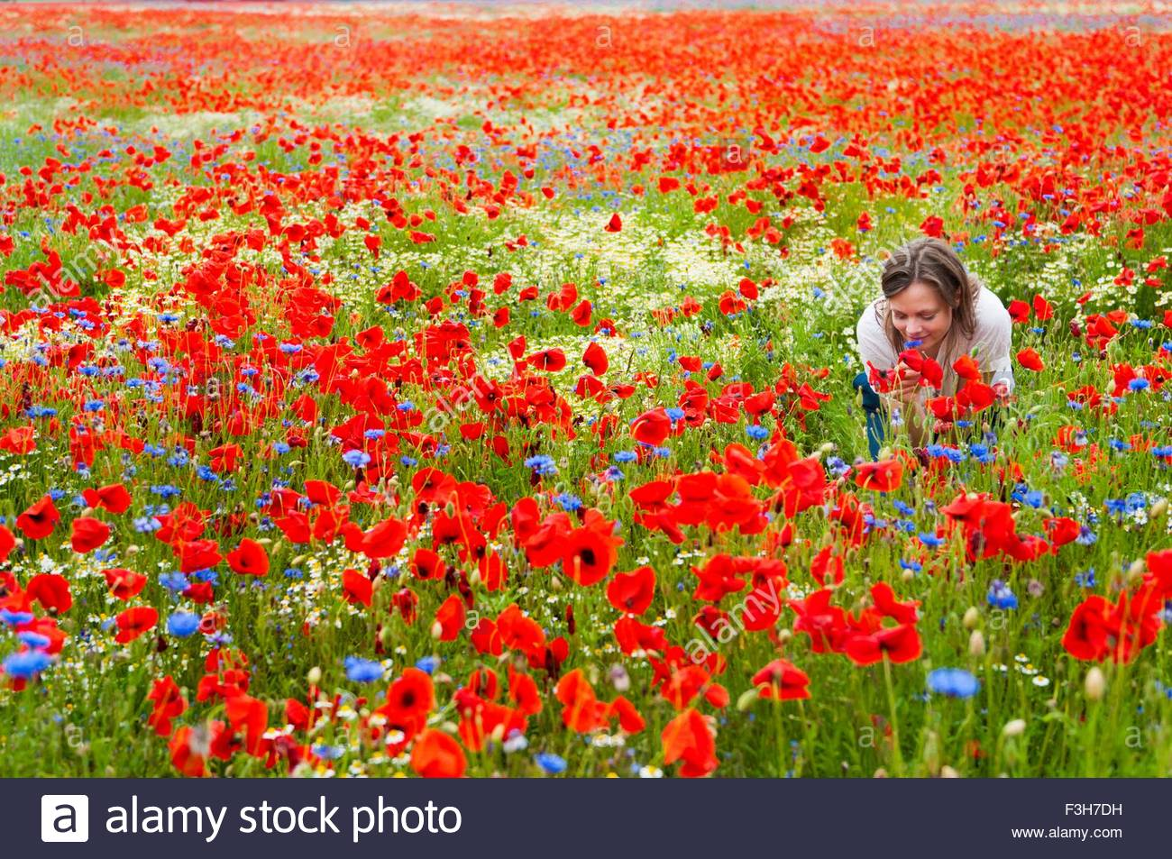 Mid adult woman in poppy field, bending to smell flowers - Stock Image