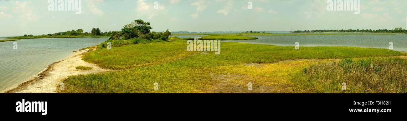 Salt marsh at Assateague Island National Seashore, Maryland - Stock Image