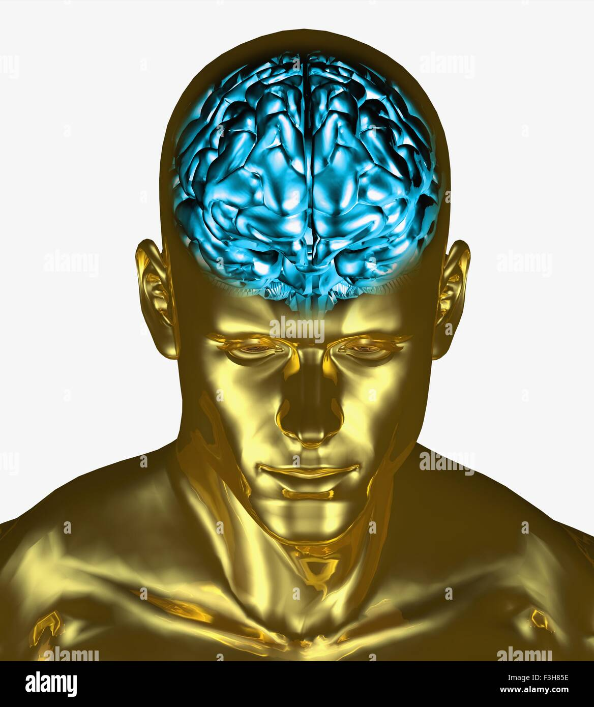 Illustration of the brain inside the skull of an adult man - Stock Image