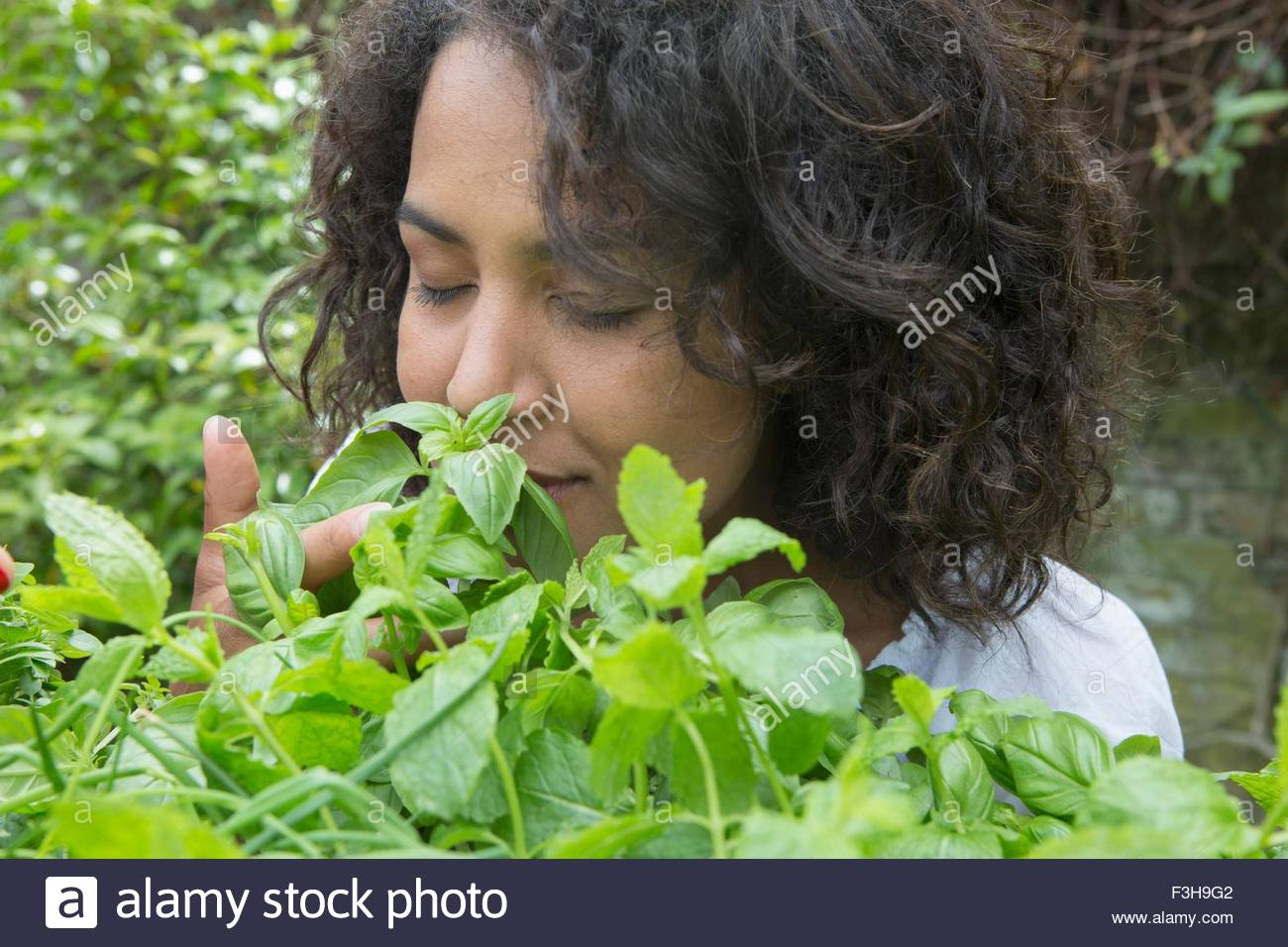 Mid adult woman smelling herbs in garden - Stock Image