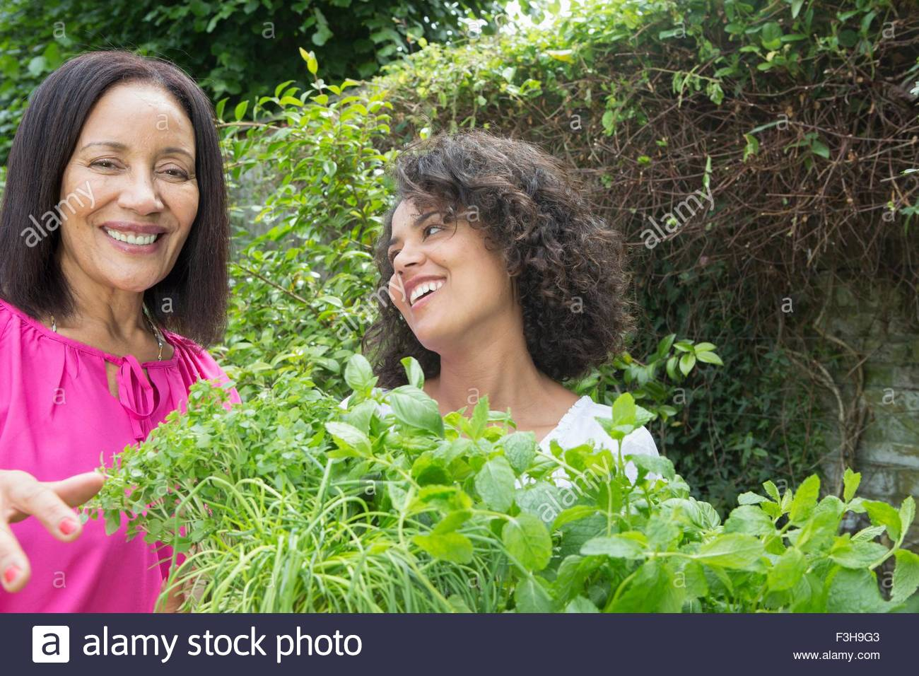 Mother and grown daughter picking herbs in garden - Stock Image