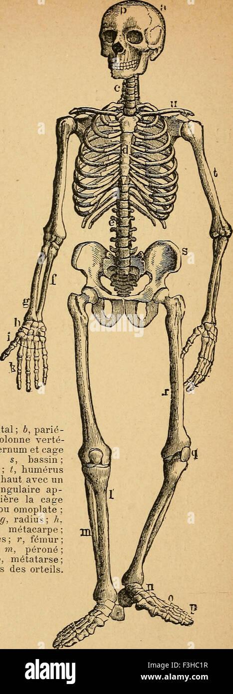Berühmt Online Anatomie Und Physiologie Kurs Akkreditiert Ideen ...