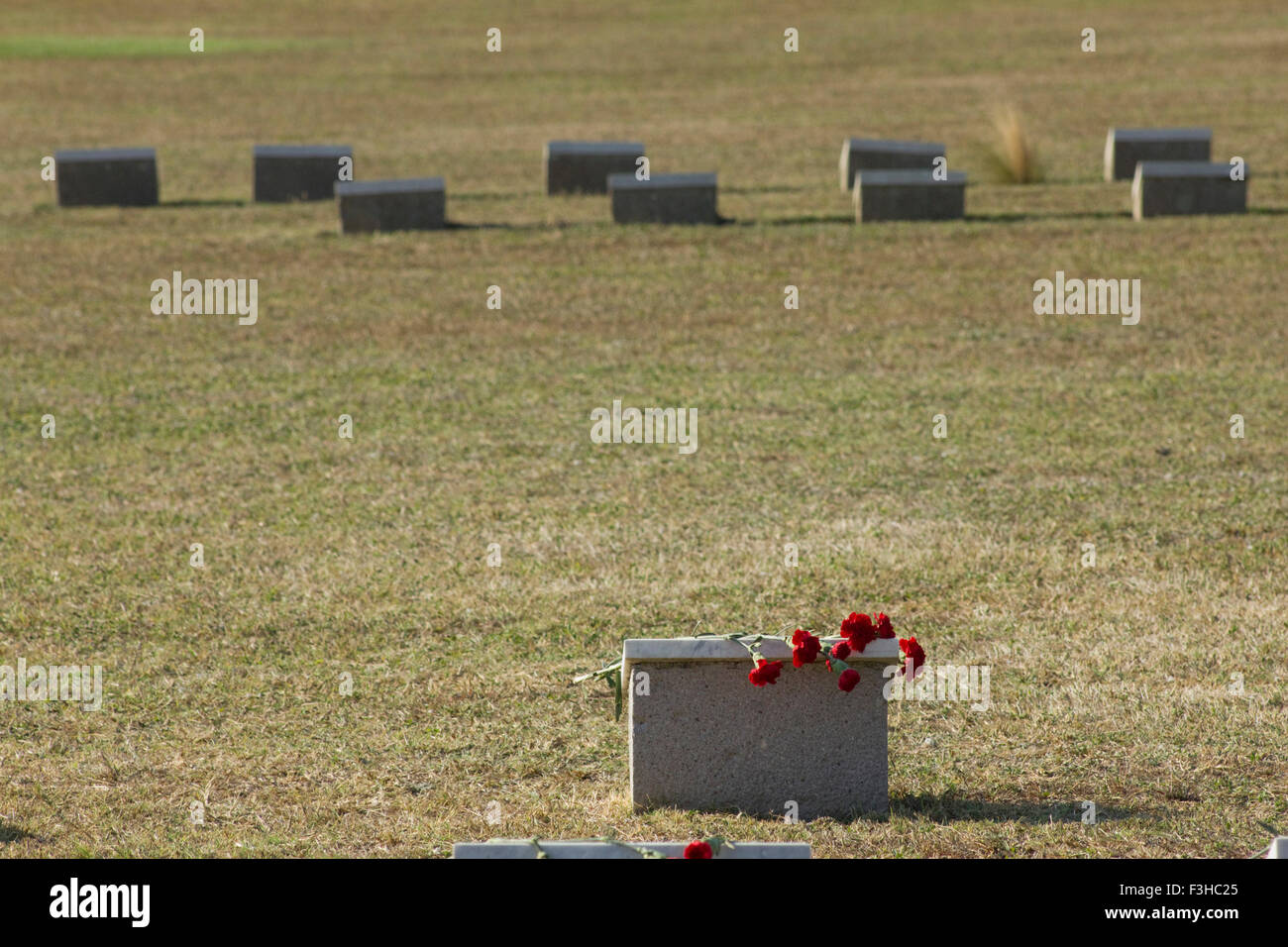 Red carnations on a Russian war casualty tombstone, recalls the loss Russian First World War casualties of 1920 - Stock Image