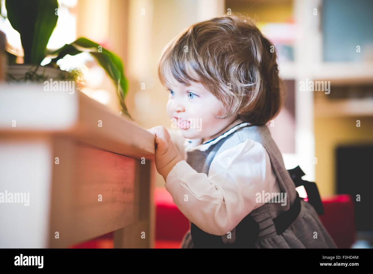 Female toddler holding coffee table whilst toddling - Stock Image