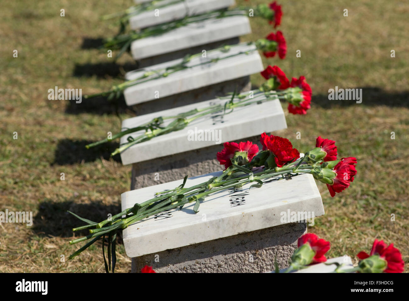 Row of Russian war casualty tombstones with red carnations on them. CWGC East Mudros cemetery.Moudros city Lemnos - Stock Image